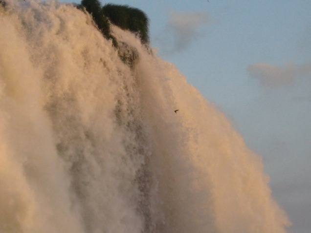 Speaking of Animals, do you see the bird flying INTO the waterfall? These birds have their nests on the inside and could be seen diving in and out of the falls all evening.
