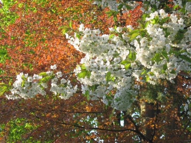 Spring - Berlin 3a