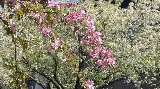 Spring - Brooklyn 1