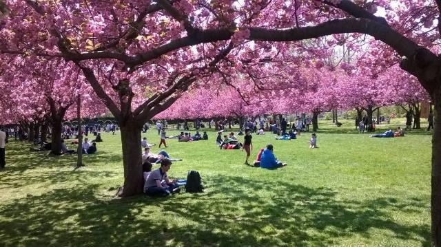 Spring - Brooklyn 2