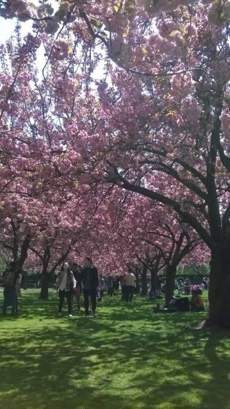 Spring - Brooklyn 3
