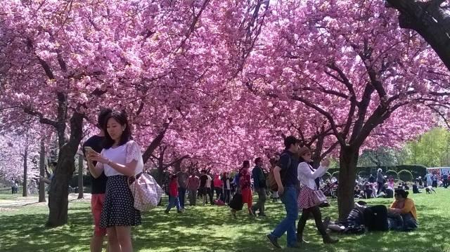 Spring - Brooklyn 4