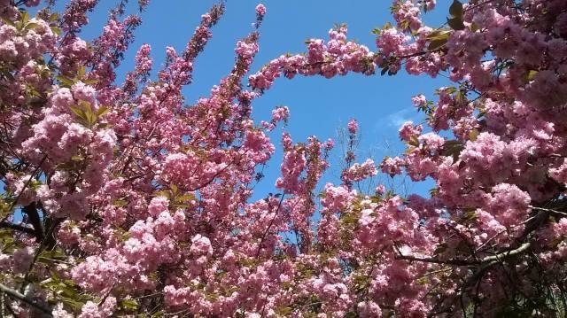 Spring - Brooklyn 5