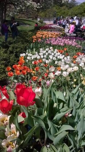 Spring - Brooklyn 6