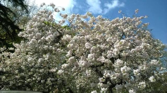 Spring - Brooklyn 9