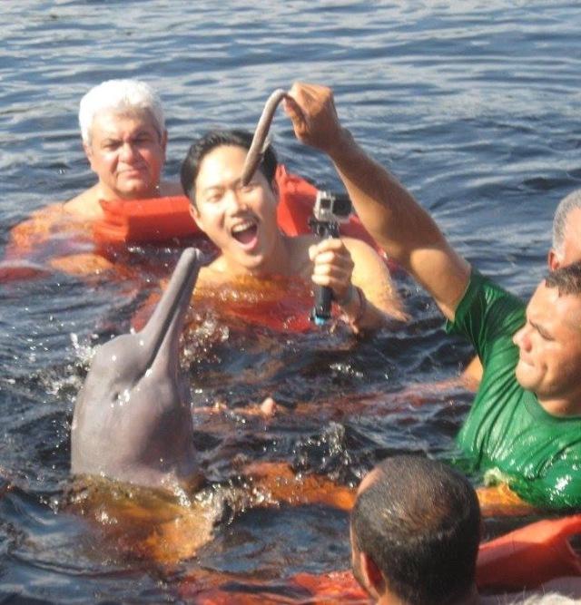 br-animals-dolphin2