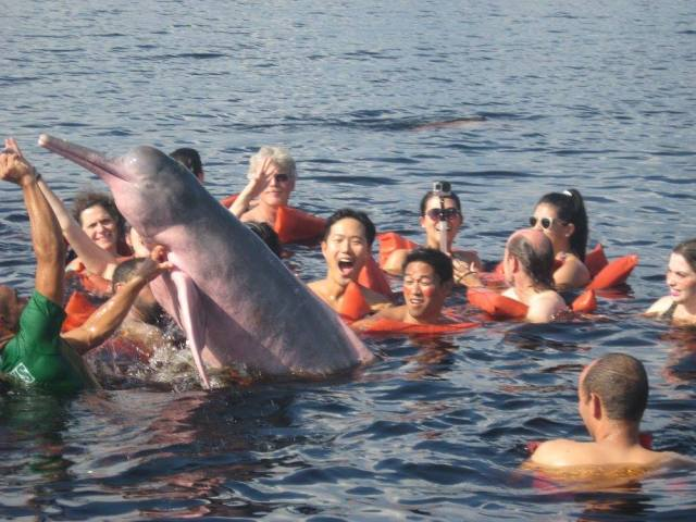 br-animals-dolphin4