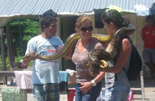 br-animals-python