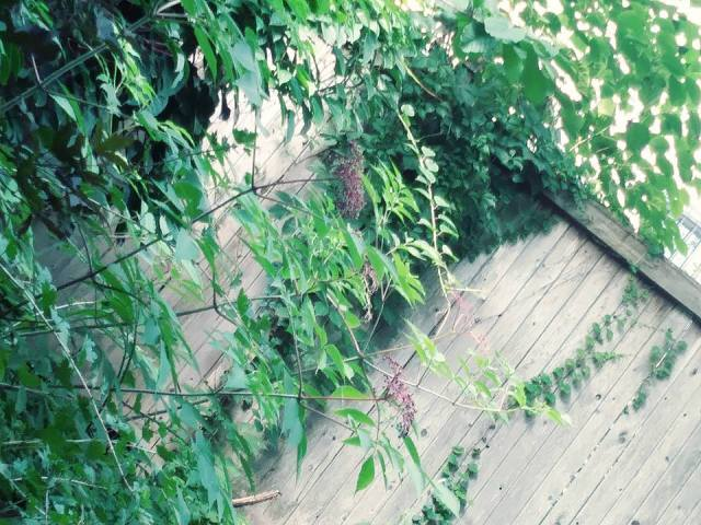 SECRET GARDEN SONGS or The View From My Lawn Chair | Notes from a ...